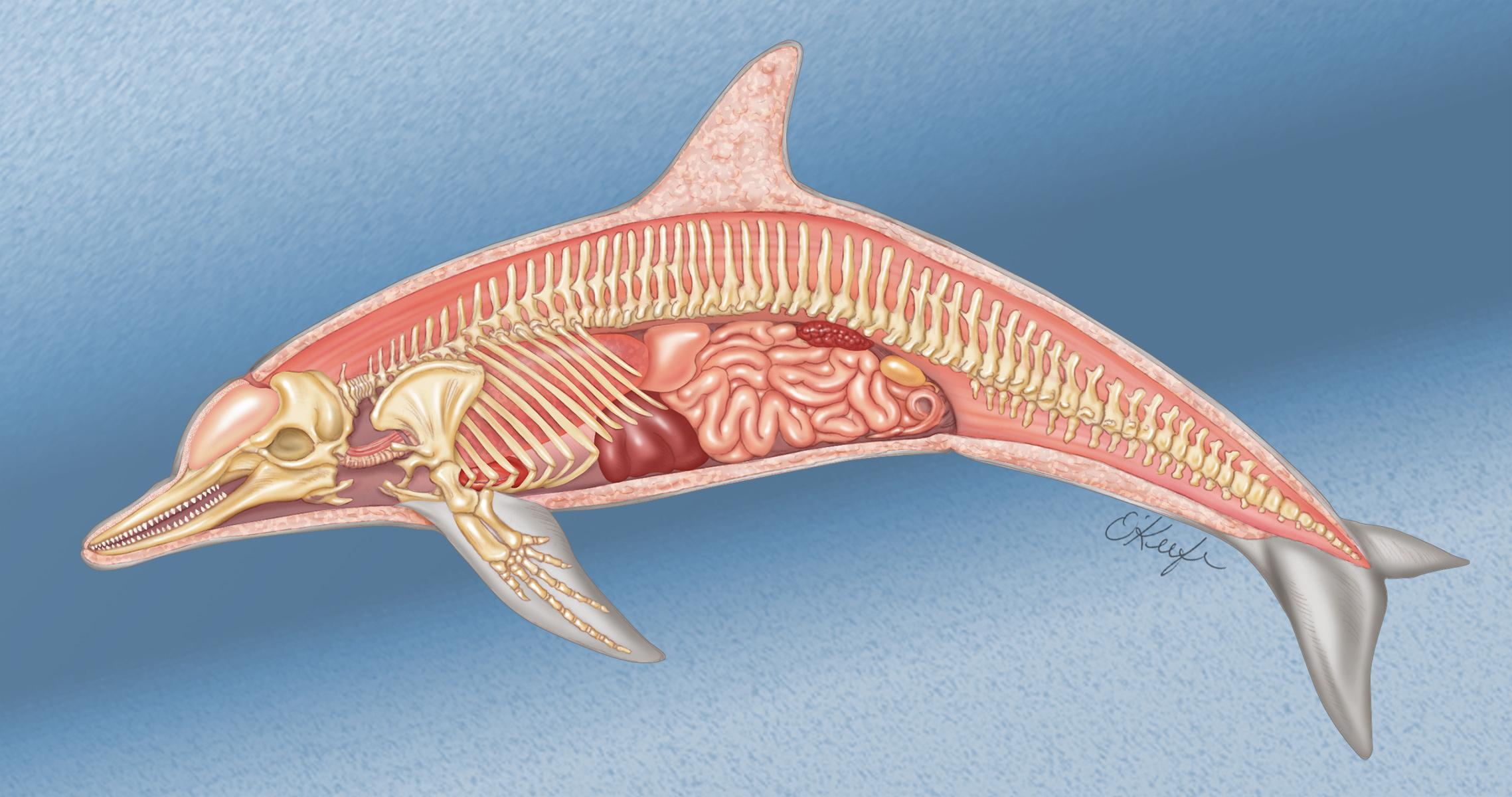 картинки внутренности кита любителям выращивать овощи