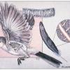 Bird Flight & Feather Structure