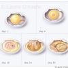 Chicken Development in Egg