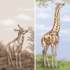 Ancient and Modern Giraffe