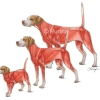 Muscular System from Puppy to Adult Dog