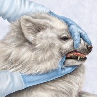 Canine Dental Exam